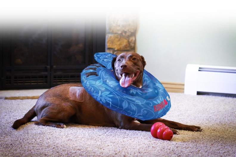 KONG Cushion- Lifestyle shot.jpg